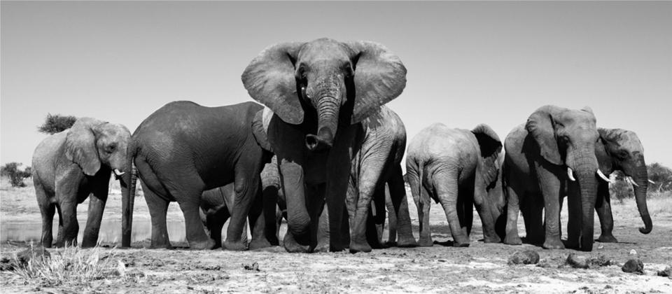 Elephant-Team